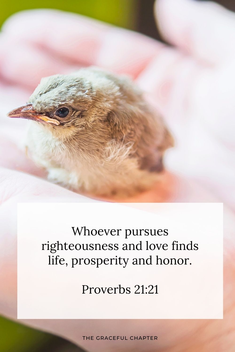 Whoever pursues righteousness and love finds life, prosperity and honor. Proverbs 21:21