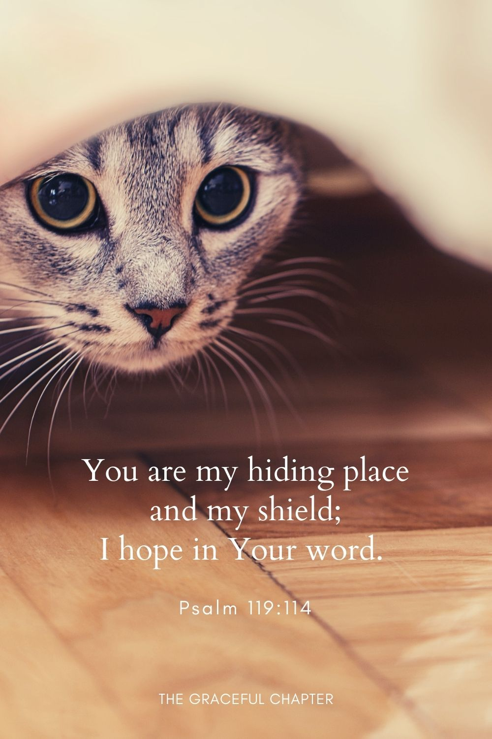You are my hiding place and my shield; I hope in Your word.Psalm 119:114