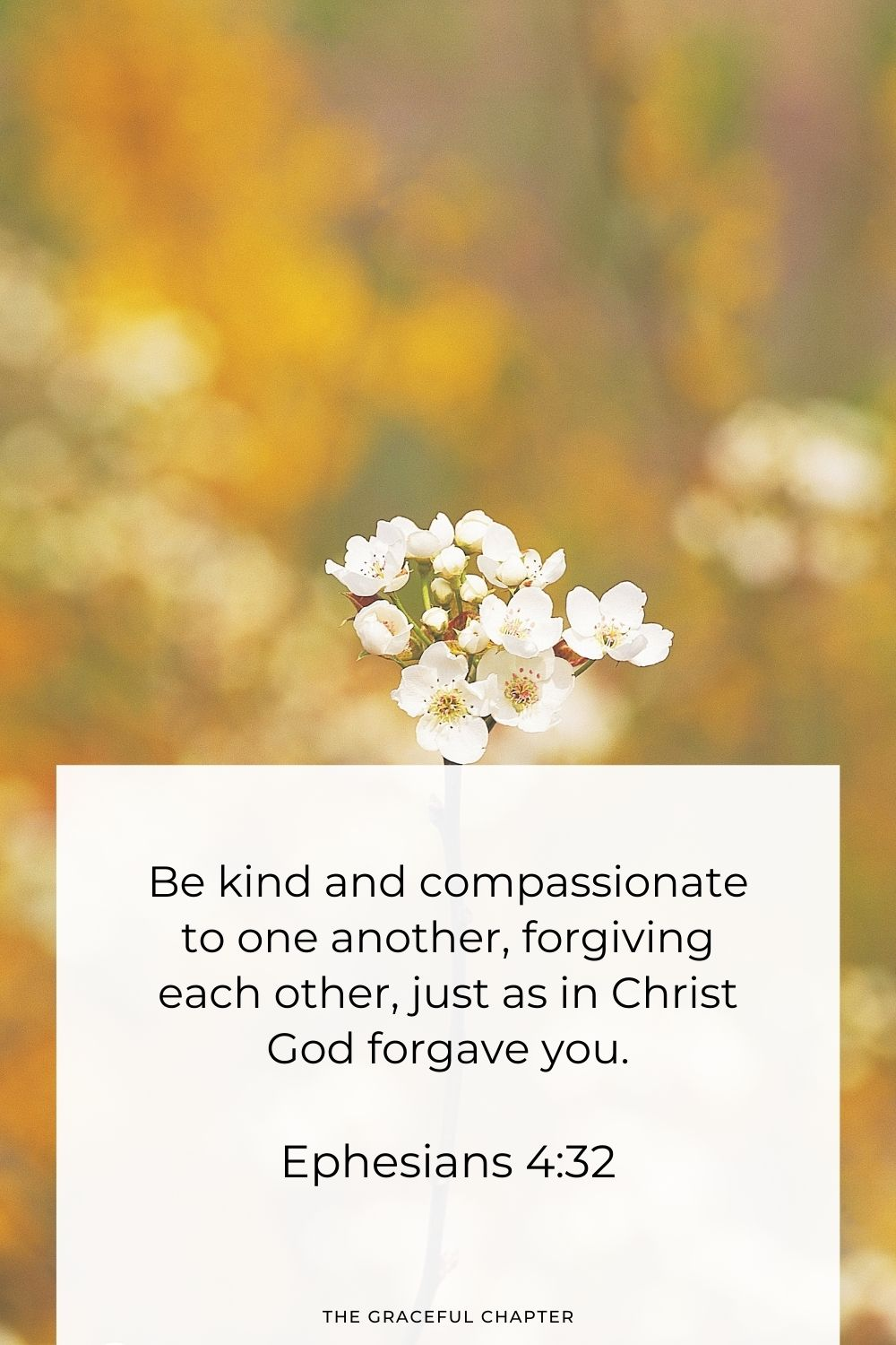 Be kind and compassionate to one another, forgiving each other, just as in Christ God forgave you. Ephesians 4:32