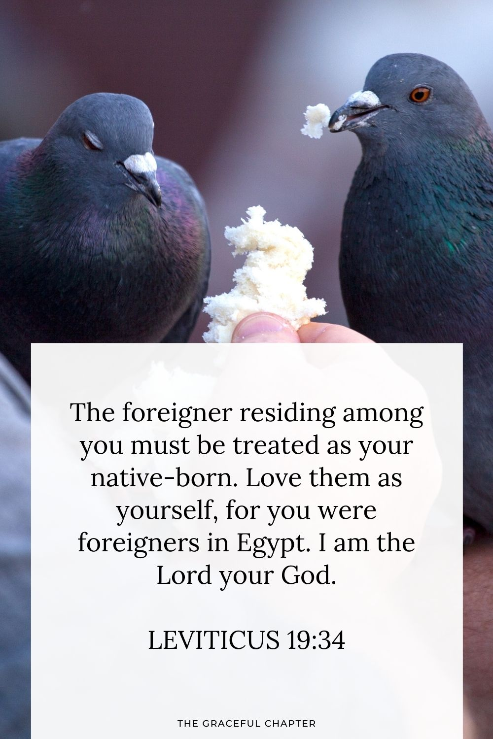 The foreigner residing among you must be treated as your native-born. Love them as yourself, for you were foreigners in Egypt. I am the Lord your God. Leviticus 19:34