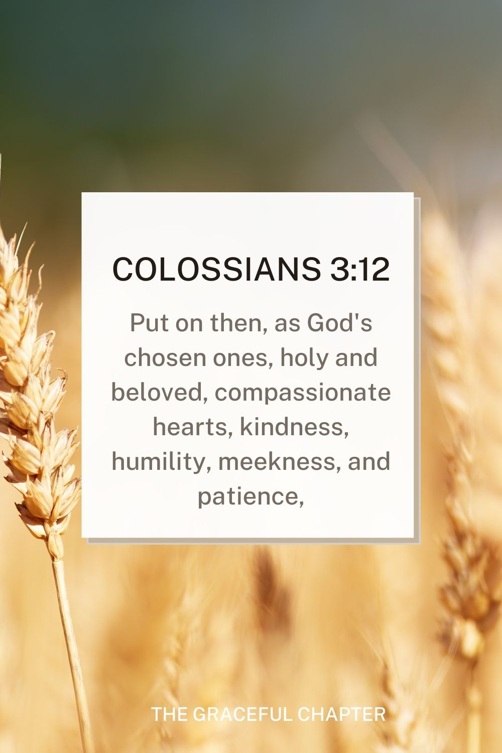Put on then, as God's chosen ones, holy and beloved, compassionate hearts, kindness, humility, meekness, and patience, Colossians 3:12