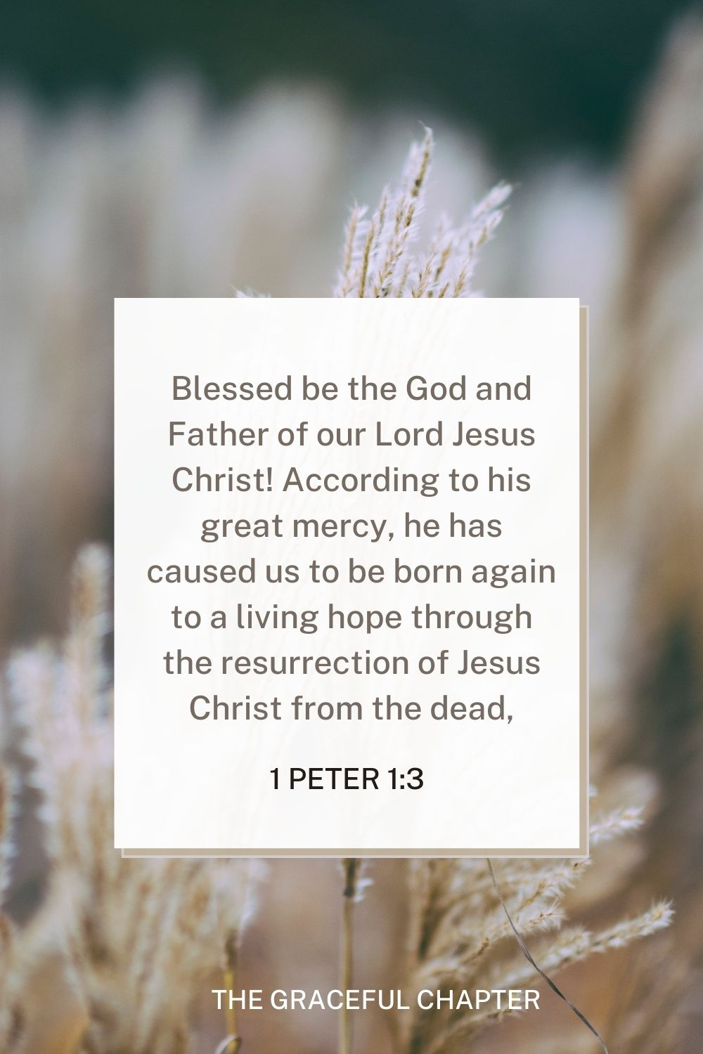 Blessed be the God and Father of our Lord Jesus Christ! According to his great mercy, he has caused us to be born again to a living hope through the resurrection of Jesus Christ from the dead, 1 Peter 1:3